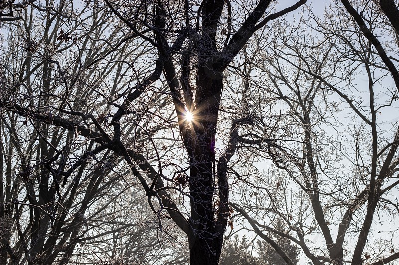 Frosty tree silhouette photo