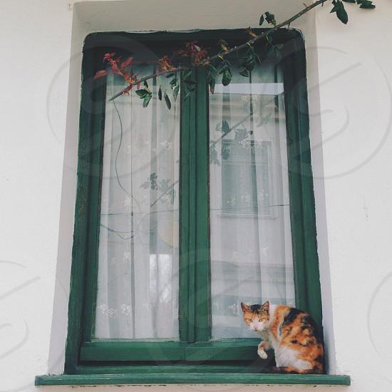 orange and black cat on the window photo