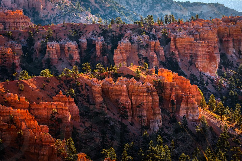 Sun Kissed Hoodoos and Pine Trees in Bryce Canyon photo