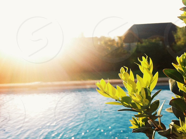 green leafy plant and swimming pool photo photo