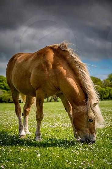 County Kerry ireland  photo