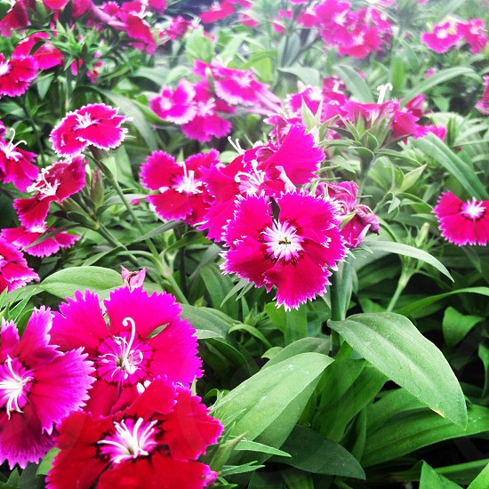 flower bloom bud red pink white green plant planting planter garden gardening blossom seed greenery summer sun soil earth photo