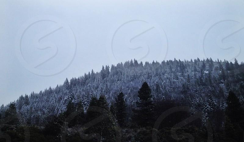 white leaf trees photo