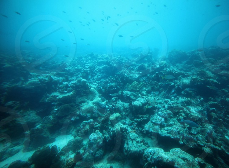 Seafloor Adventures photo