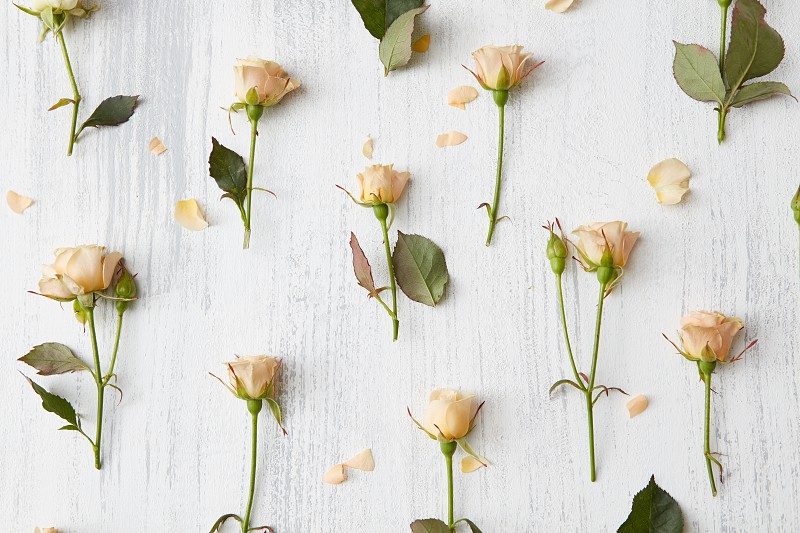 Valentines Day background. Floral pattern made roses and green leaves on white background. Flat lay photo