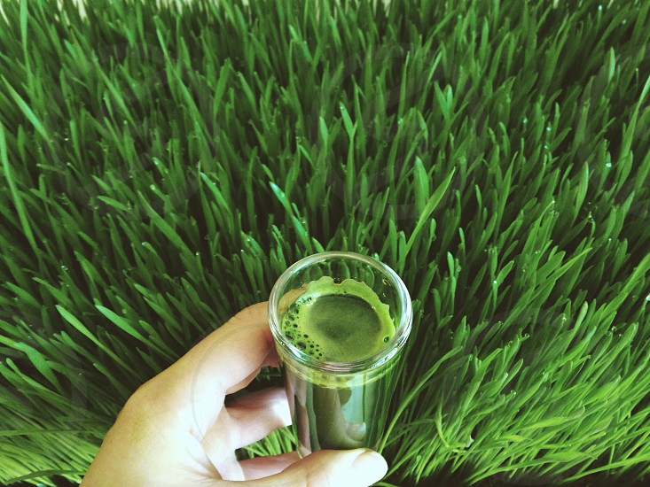Wheat grass photo
