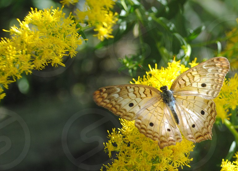 Delicate Butterfly Yellow Garden Peaceful Salon Spa Hotel Home Garden photo