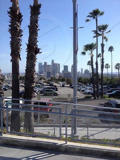 close-up photo of white metal railings near palm tree photo