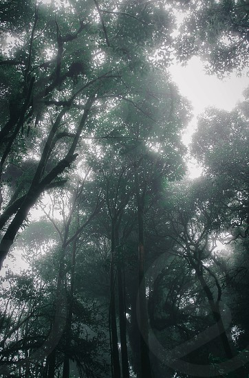 Forest in the misttree green fog trunk wood photo