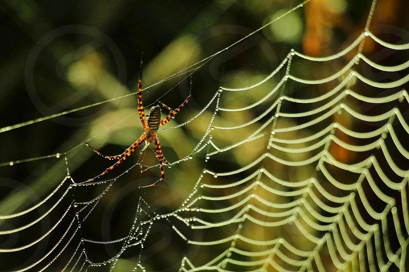 spiderweb spider web nature wild arachnid  photo