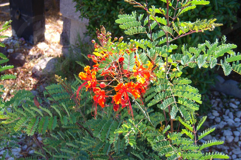 yellow and red flowered green plant photo