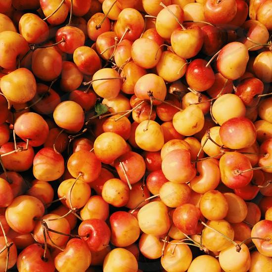 bing cherries photo