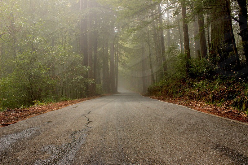 Road northwest fog nature beautiful  photo