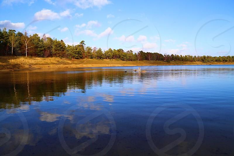 Calmness sweden lake nature swans birds photo