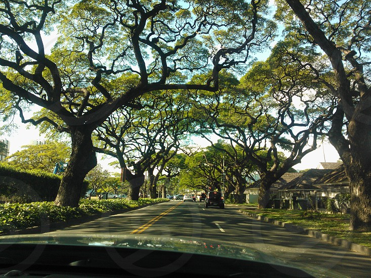 Getting lost in Honolulu in our convertible rental. Happened upon this street with a gorgeous view of the trees. photo