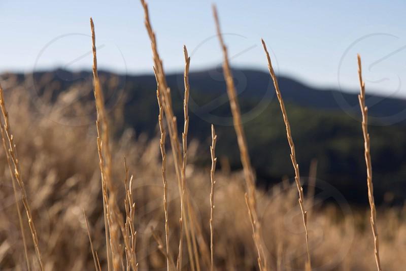 macro field grass mountains hike photo