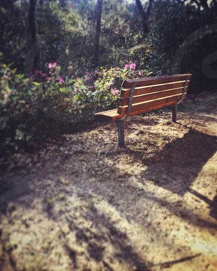 Nature bench tree foliage flowers beautiful  photo