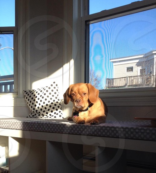 Bay window bench with the sunbathing dog - window seat photo