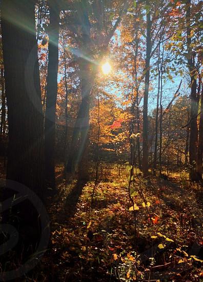 Sun rays through autumn trees photo