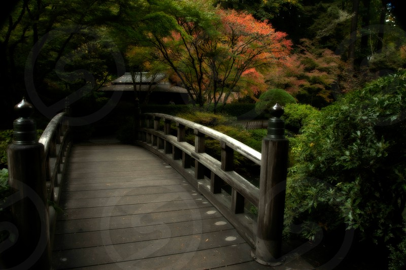 Japanese Garden Bridge - autumn photo