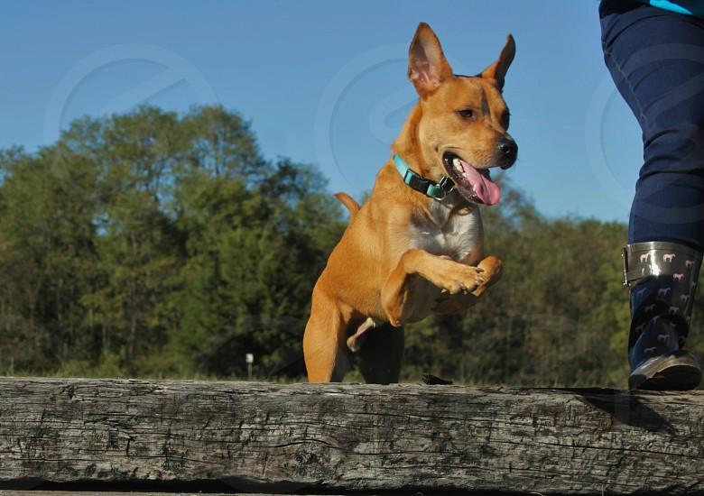jumping dog wood grass trees sky blue green photo