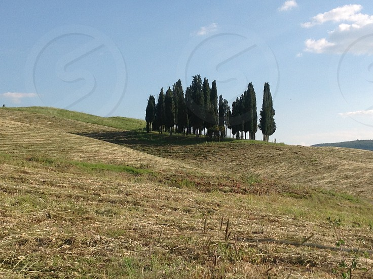 Trees of Tuscany photo