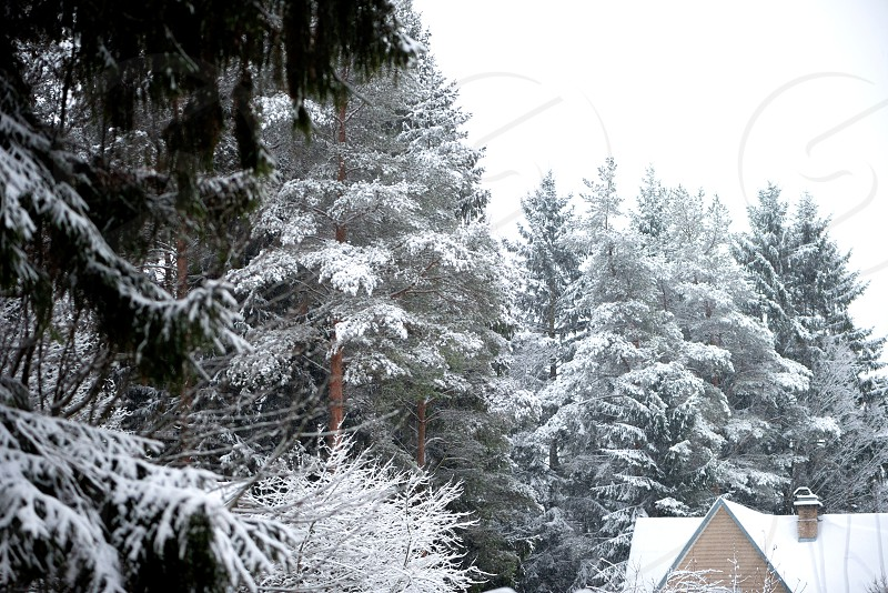 Country house trees in snow forest winter nature photo