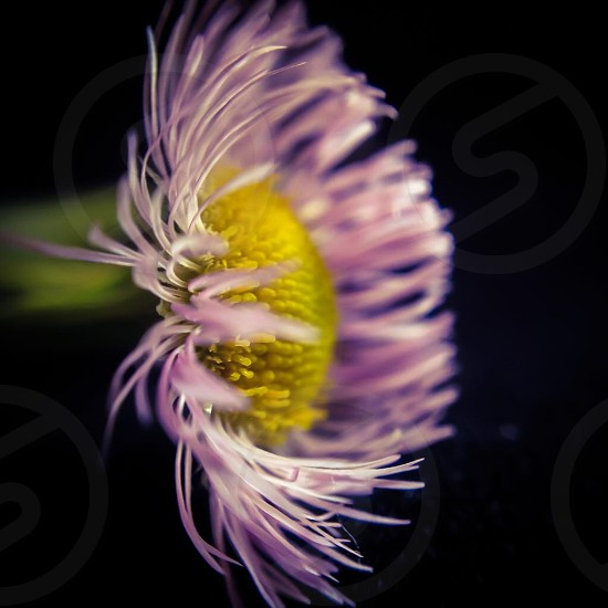 purple and yellow flower plant photo