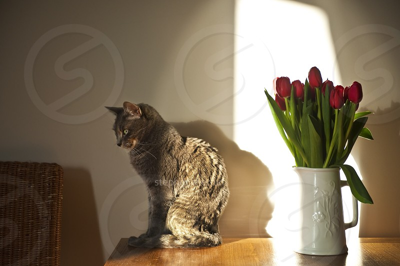 cat & flowers photo