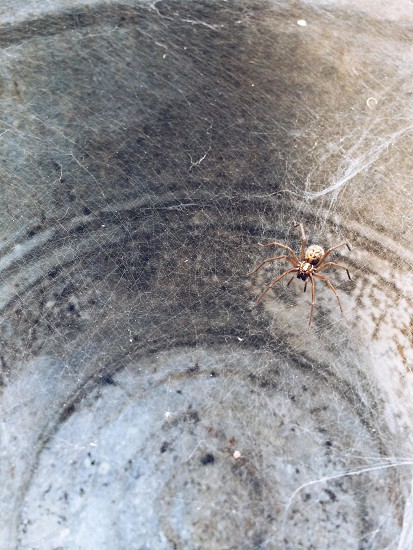 Spider found hiding in a rusty old trash can at the bottom of the garden photo