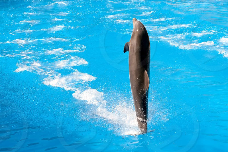 Dolphin Show at Loro Parque photo