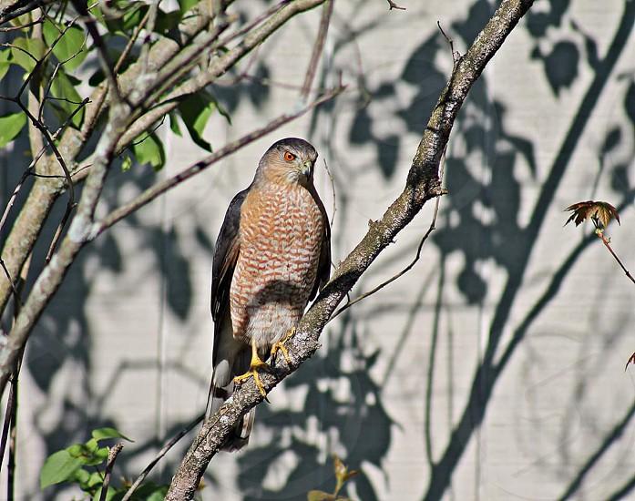 #Birds of Prey #Birds #Nature #Flying #Fly photo