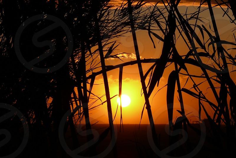 trees at sunset photo