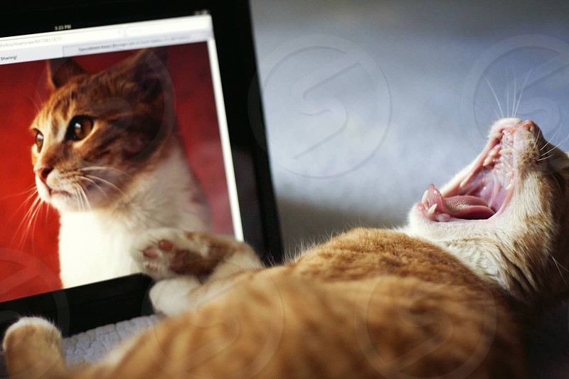 Cat and an iPad  photo