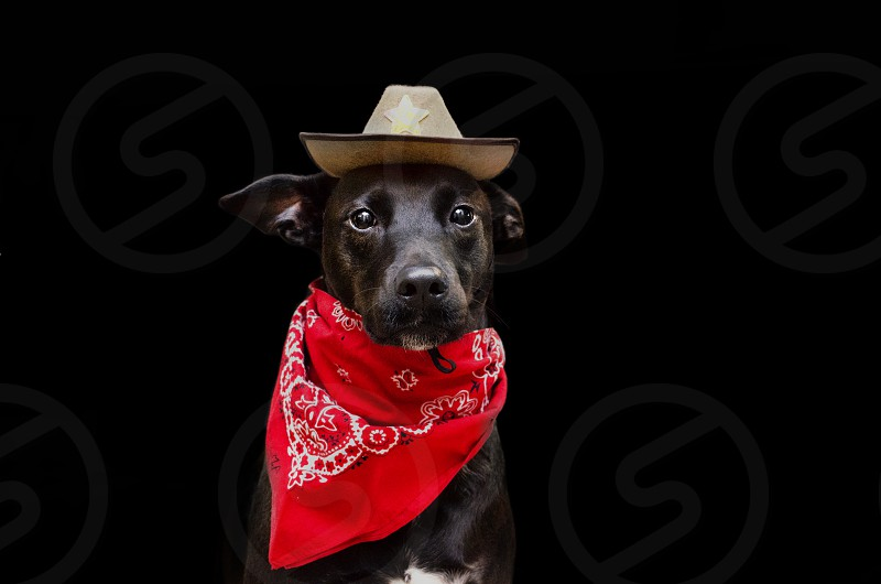 Cute dog in cowboy hat and red bandanna. photo