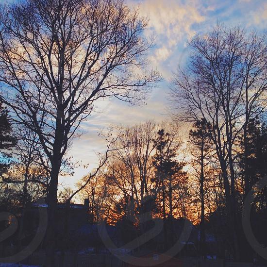 Backyard. photo