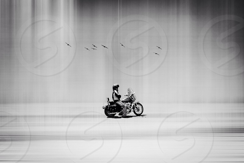 flock of birds flying over person riding motorcycle photo