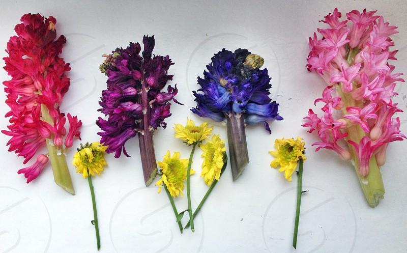 idea flower driedflowers color herbarium  photo