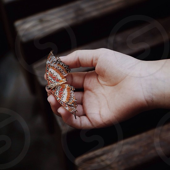 brown white and black butterfly on hand photo
