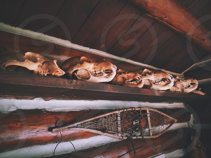 skulls bones vintage cabin rustic snowshoe mountain collection photo