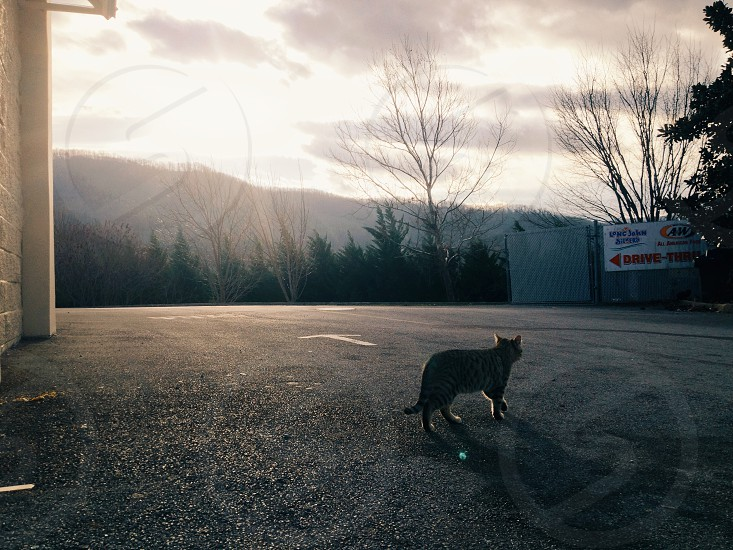 gas station cat stray cat kitten west virginia truck stop appalachia mountain road photo