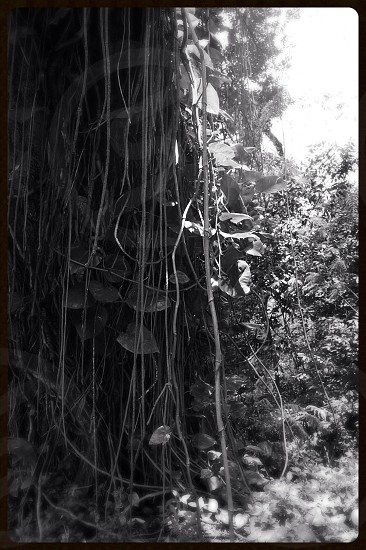 Grey woods photo