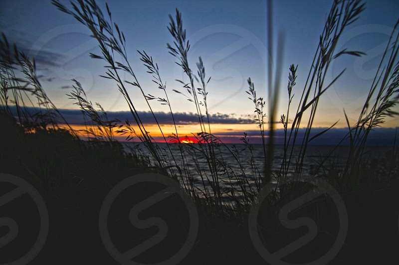 view of sunset over water through plants photo
