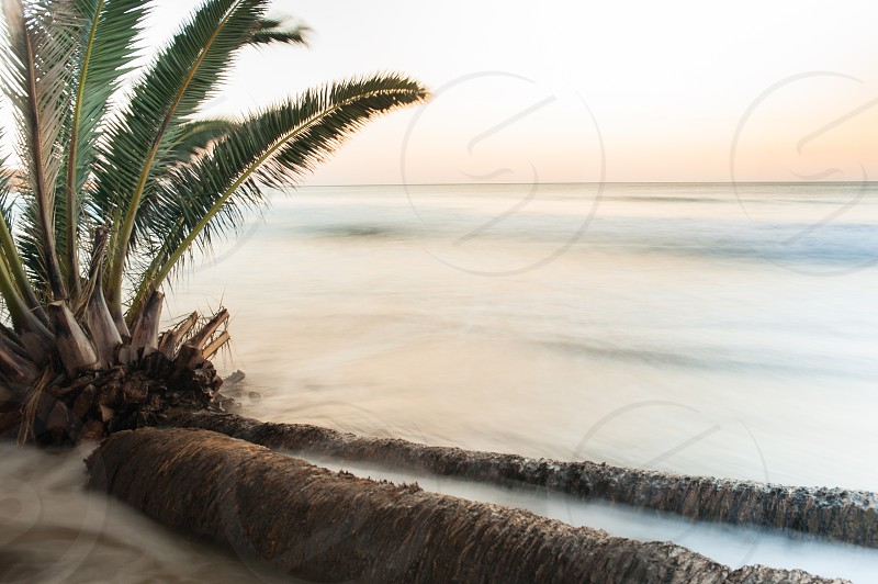 seashore with coconut tree under white sky during daytime photo
