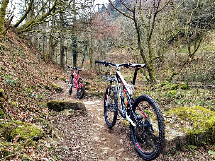 Mountain bike biking woods forest stones trees extreme sports  photo