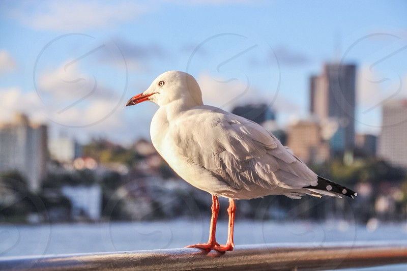 City Harbour Seagull photo