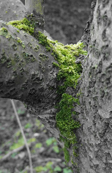 closeup photography of gray and green tree photo