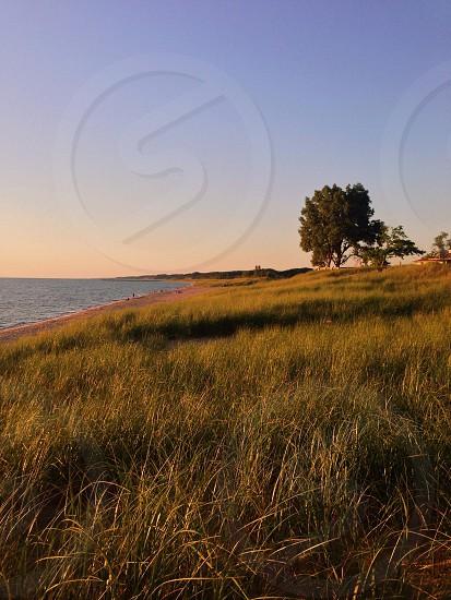 green field near beach photo