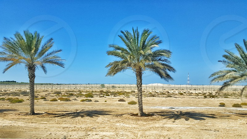 palm trees under clear blue sky during daytime photo