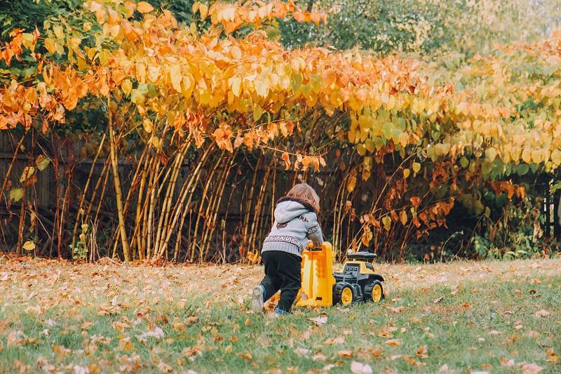 Child boy fall leaves trees photo